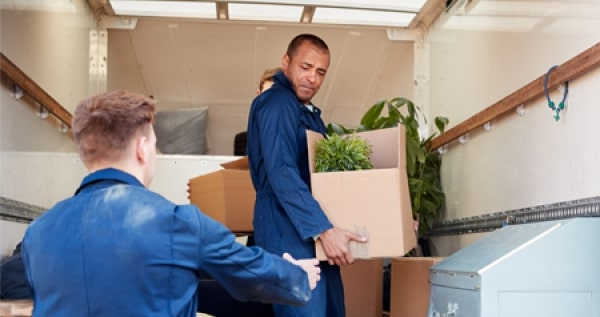 Two men storing cardboard boxes with plants and appliances